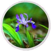 Dwarf Crested Iris Round Beach Towel