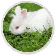 Dwarf White Bunny Spring Scene Round Beach Towel