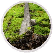 Dying Tree In The Forest Round Beach Towel