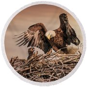 Bald Eagle And Eaglet In Nest Round Beach Towel