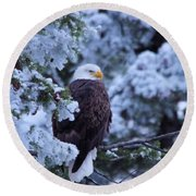 Eagle In A Frosted Tree Round Beach Towel