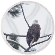 Eagle In A Pine Tree Round Beach Towel