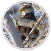 Eagle In A Tree Round Beach Towel