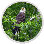 Eagle In Tree Round Beach Towel