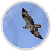 Eagle Lakes Park - Osprey In Flight With Sea Fish Meal Round Beach Towel