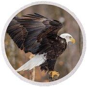 Eagle Landing On Perch Round Beach Towel