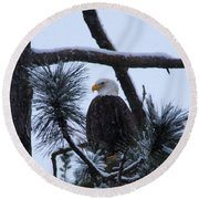 Eagle On A Frosted Limb Round Beach Towel