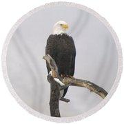 Eagle On A Snag  Round Beach Towel