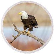 Eagle Overlooking Colorado River Round Beach Towel