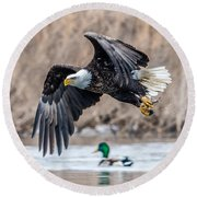 Eagle With Lunch Round Beach Towel