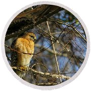 Early Morning Still Hunting  Coopers Hawk Art Round Beach Towel