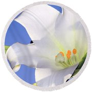 Easter Lily Back Lit By The Sun  Round Beach Towel