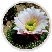 Easter Lily Cactus Round Beach Towel