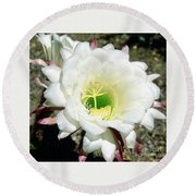 Easter Lily Cactus Flower Round Beach Towel