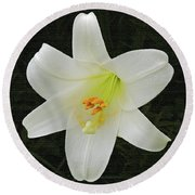 Easter Lily With Black Background Round Beach Towel