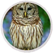Eastern Barred Owl Round Beach Towel
