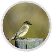 Eastern Phoebe At Falcon State Park Of Texas Round Beach Towel