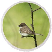 Eastern Phoebe Round Beach Towel