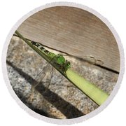 Eastern Pondhawk On A Leaf Round Beach Towel