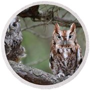 Eastern Screech Owls 424 Round Beach Towel
