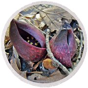 Eastern Skunk Cabbage Spathes - Symplocarpus Foetidus Round Beach Towel