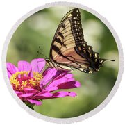 Eastern Tiger Swallowtail 2016-1 Round Beach Towel