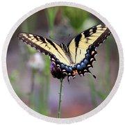 Eastern Tiger Swallowtail Butterfly In Garden 2016 Round Beach Towel