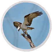 Eating Osprey-1 Round Beach Towel by Rudy Umans