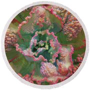 Echeveria Plant At Balboa Park 2 Round Beach Towel