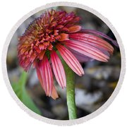 Echinacea Hot Papaya Round Beach Towel