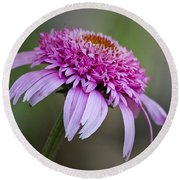 Echinacea Pink Double Delight Round Beach Towel