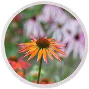 Echinacea Purpurea Orange Passion Flower Round Beach Towel