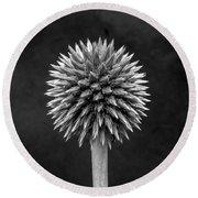 Echinops Monochrome Round Beach Towel