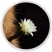 Echinopsis Atacamensis Cactus Flower Round Beach Towel