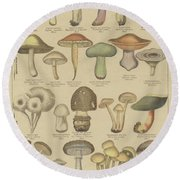 Edible And Poisonous Mushrooms Round Beach Towel