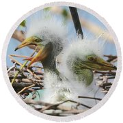 Egret Chicks In Nest With Egg Round Beach Towel