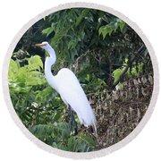Egret In A Tree Round Beach Towel