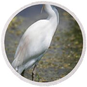 Egret Or Crane Round Beach Towel