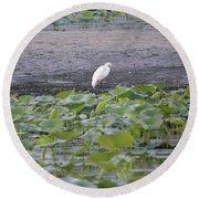 Egret Standing In Lake Round Beach Towel