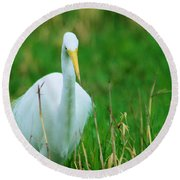 Egret Stare Down Round Beach Towel