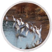 Egrets Gathering For Fishing Contest. Round Beach Towel