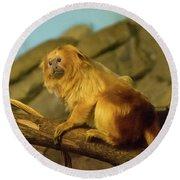 El Paso Zoo - Golden Lion Tamarin Round Beach Towel by Allen Sheffield