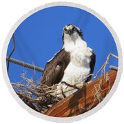 Electric Blue Osprey Round Beach Towel