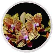Elegant Orchid On Black Round Beach Towel