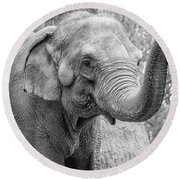 Elephant And Tree Trunk Black And White Round Beach Towel