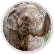 Elephant And Tree Trunk Round Beach Towel