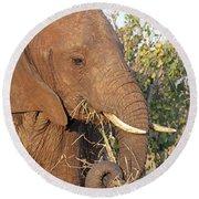 Elephant - Curled Trunk Round Beach Towel