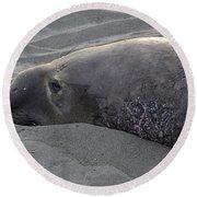Elephant Seal 5 Round Beach Towel