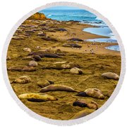 Elephant Seals Near Cambria  Round Beach Towel