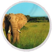 Elephant Round Beach Towel